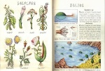 A page from the CodexSeraphinianus