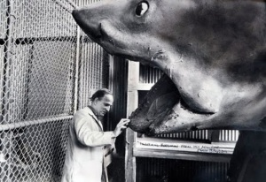 Ingmar Bergman with the shark from Jaws