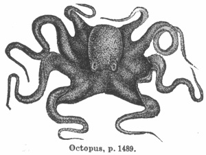 Octopus engraving