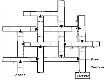 Maze designed Edward C. Tolman
